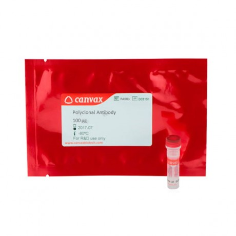 Rabbit Anti-FGF2 (Fibroblast Growth Factor 2)